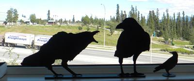 Sheet metal ravens